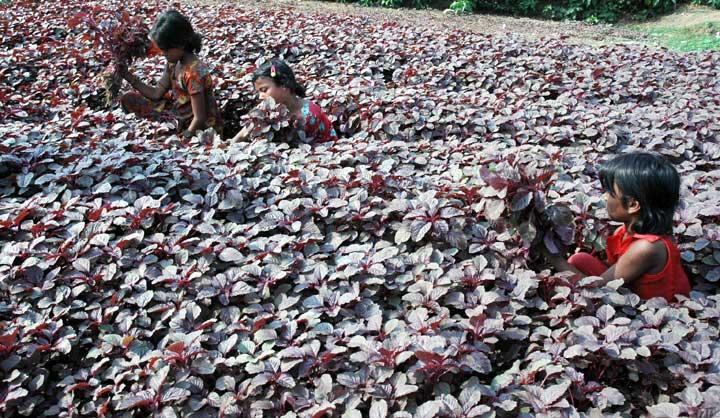 শীতে সবজির সমারোহ : স্বস্তি নেই বাজারে- রূপম ভট্টাচার্য